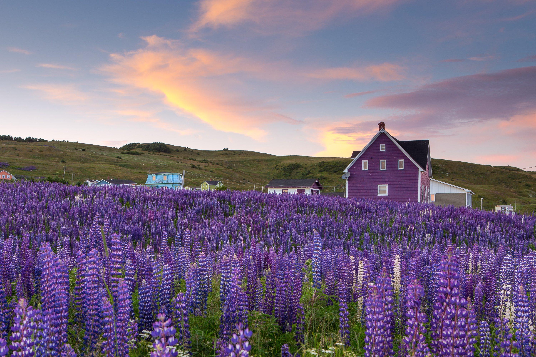 Maison colorée typique des Îles de la Madeleine