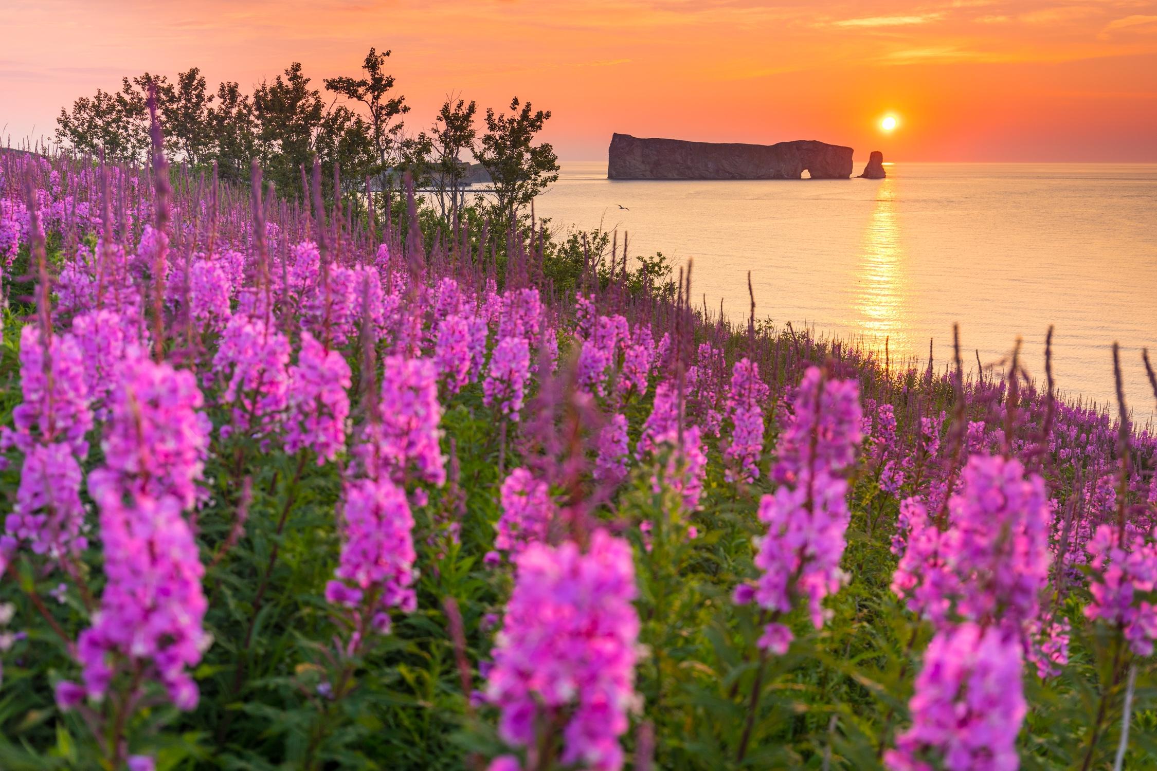 La Gaspésie : pour passer du rêve à la réalité