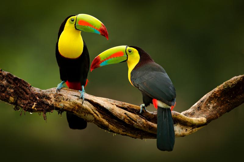 Vidéo Costa Rica Nature