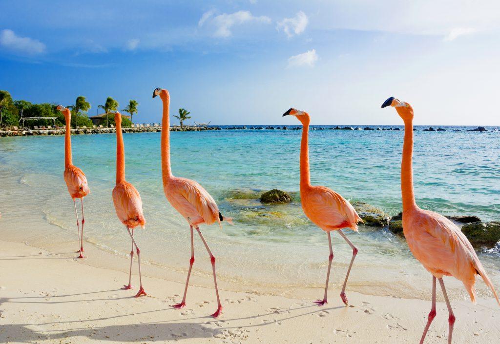 Aruba en vidéo : entre flamants roses et cactus